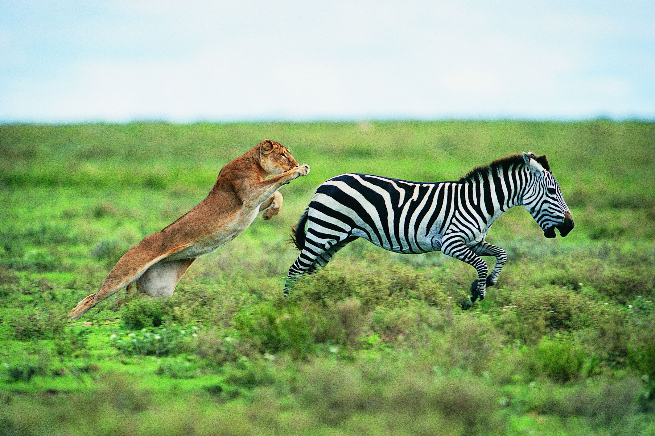 False coloring in animals - What Is The Evolutionary Arms Race In Natural Selection