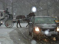 Carriage horse working in snowstorm, NYC