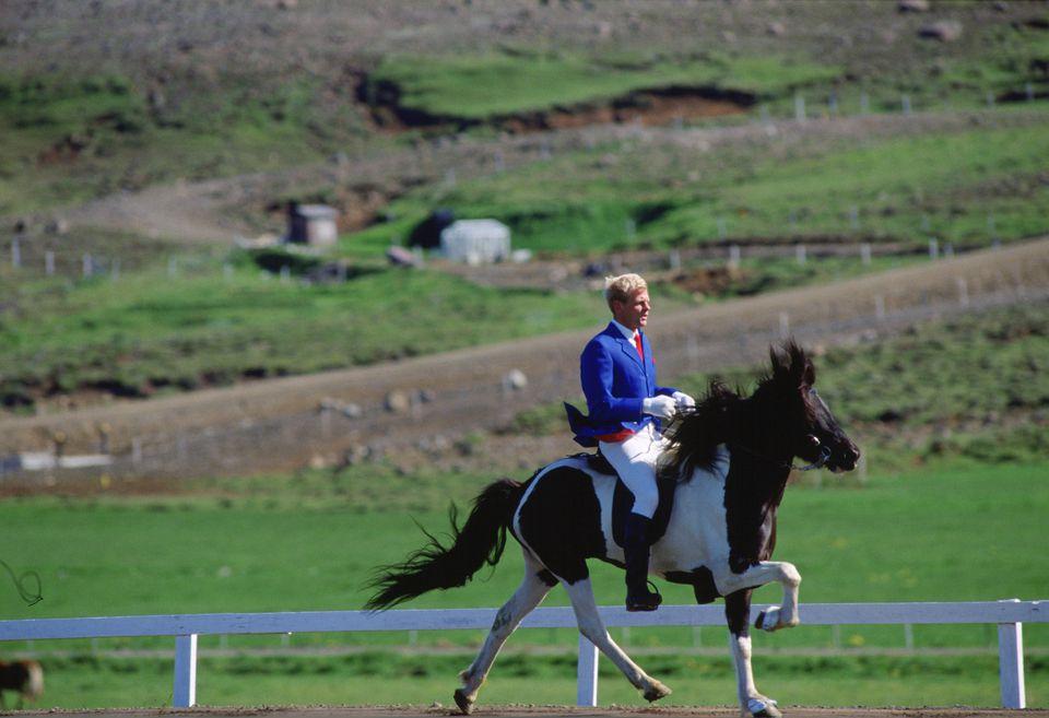 Rare Icelandic Horse, Dalur, Iceland