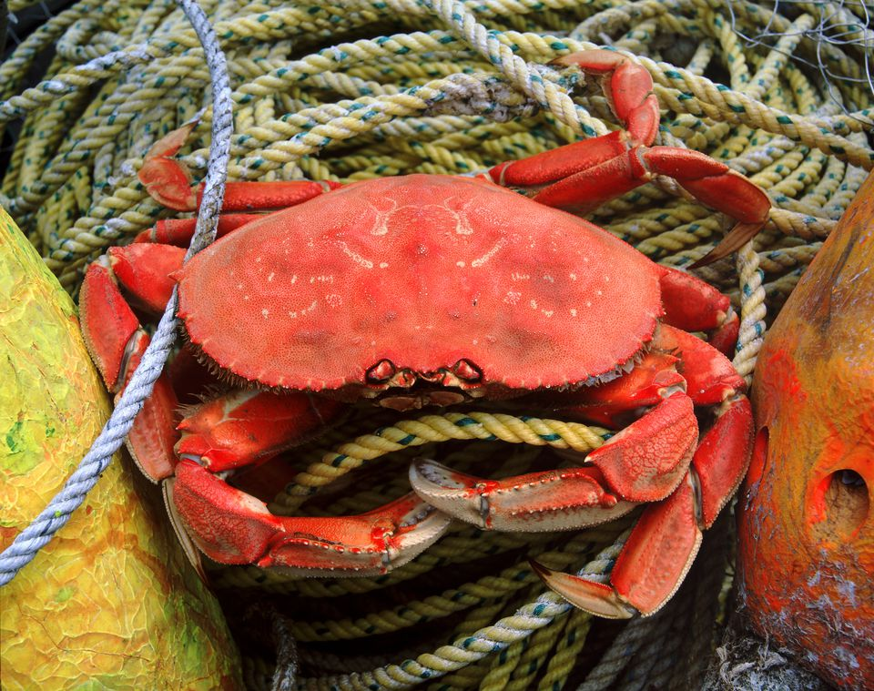 how to cook speckled crabs