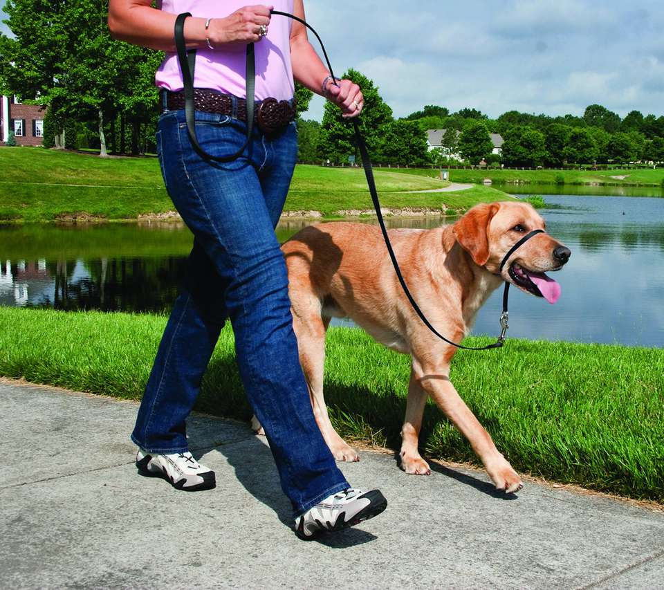 gentle leader head collar for dogs that pull on the leash