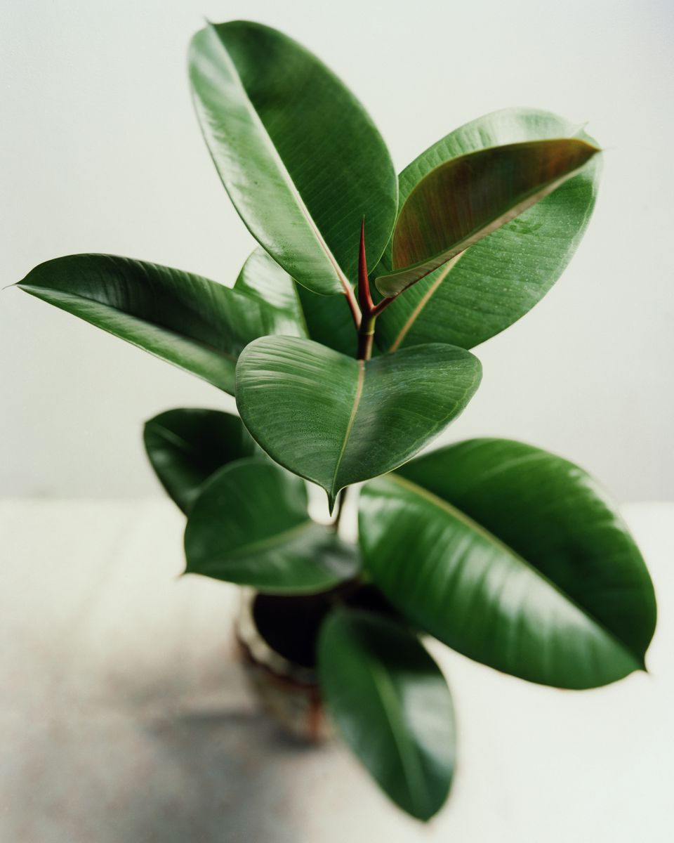 The top 10 air purifying plants for your home - Good plants for home ...