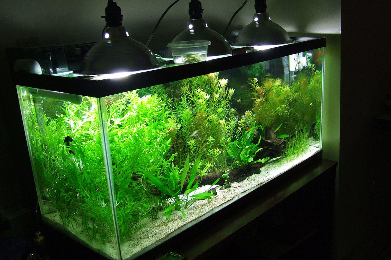 Освещение аквариума своими руками: мощность ламп, их тип 58