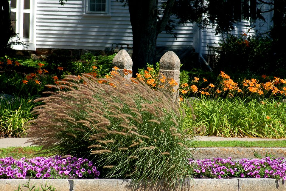 Flower borders ideas to make your landscaping sizzle for Tall border grass