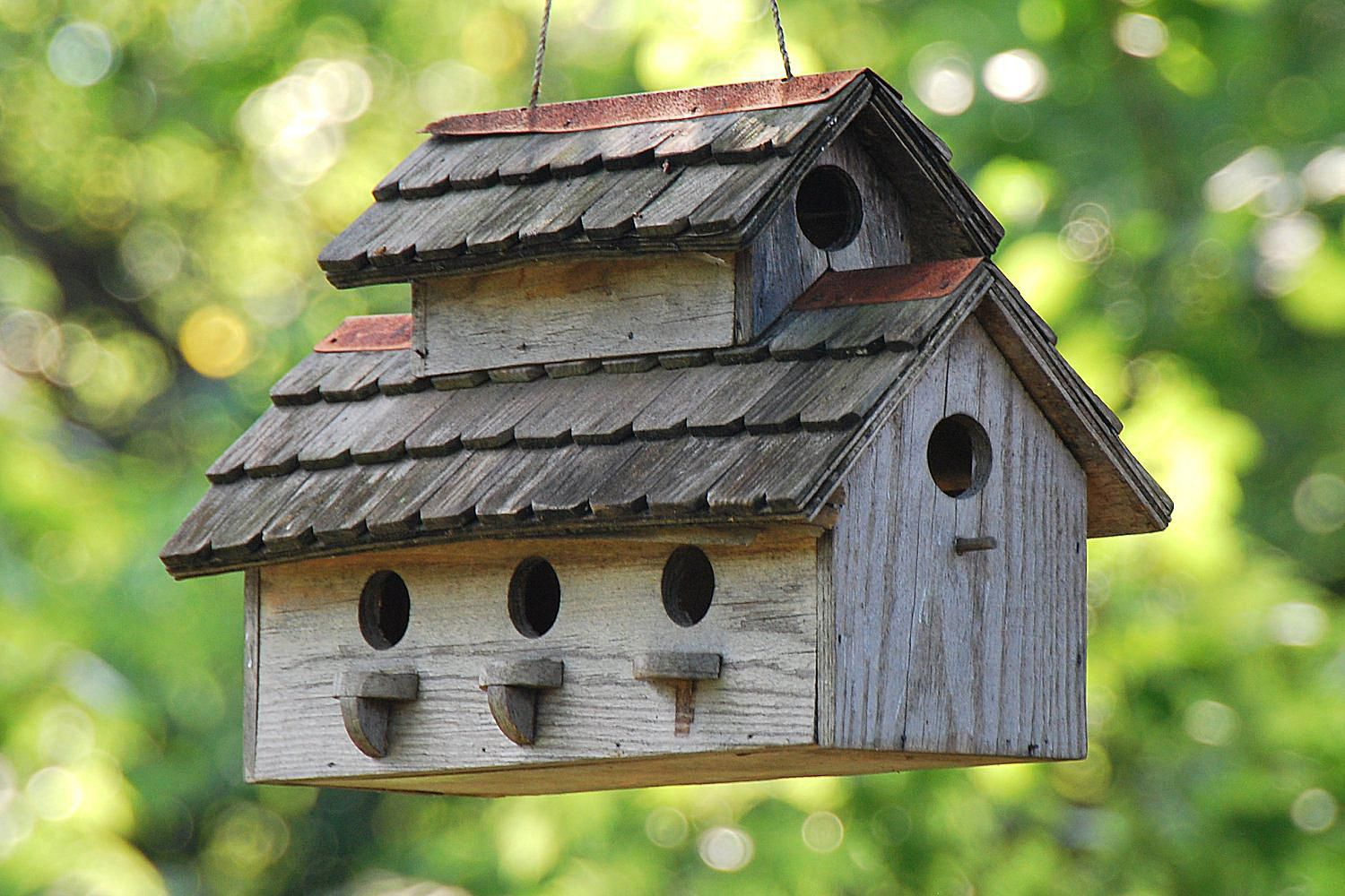 Bird House Building Tips And Resources