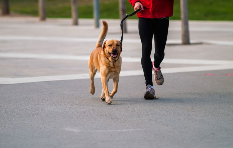 person in exercise wear walking dog