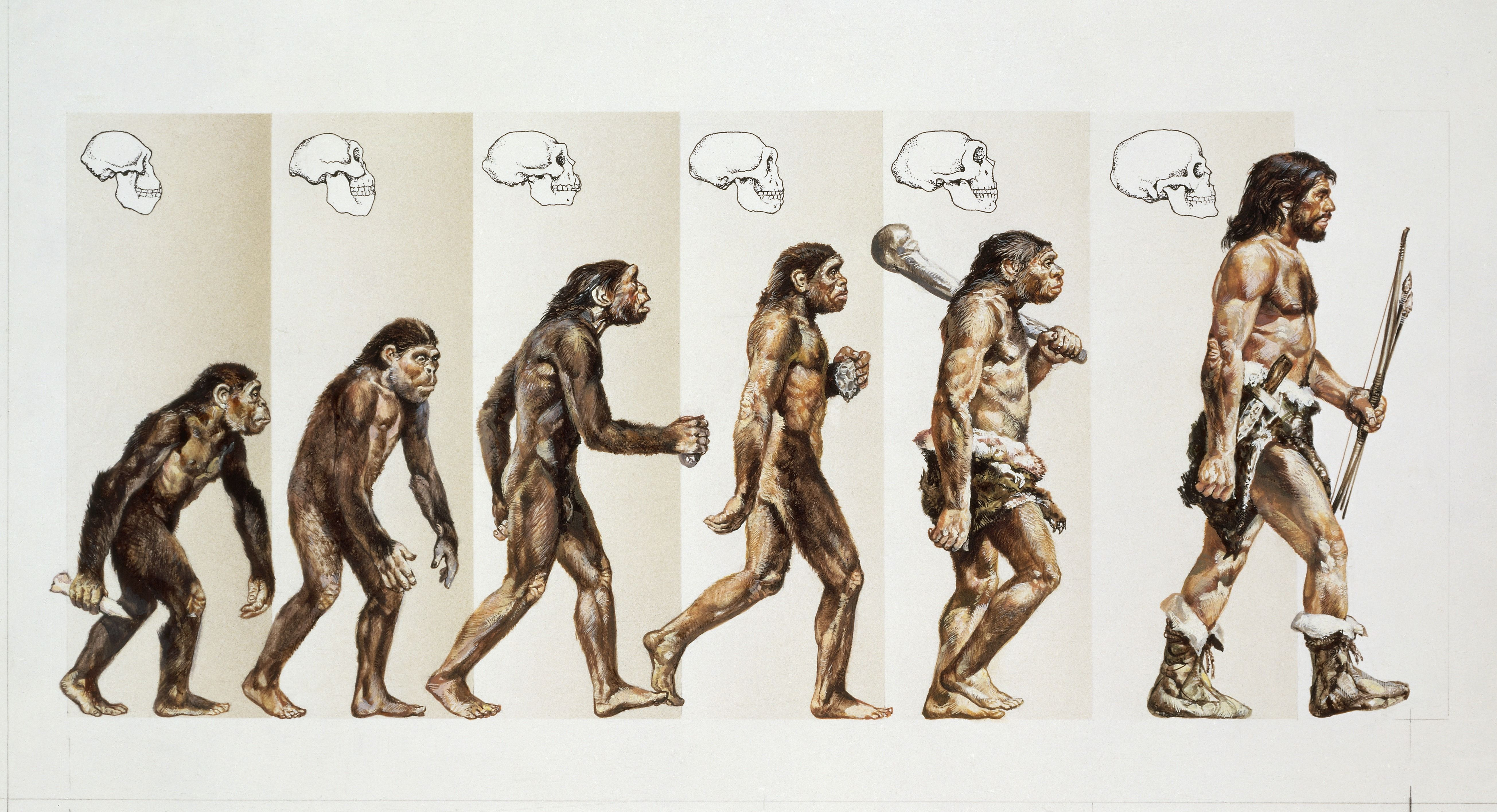 microevolution to macroevolution Macroevolution, microevolution, speciation study guide by nancyke includes 64 questions covering vocabulary, terms and more quizlet flashcards, activities and games.