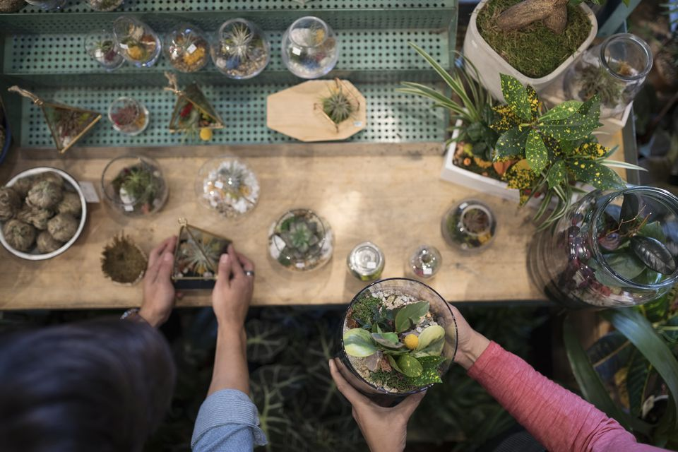 Overhead view man and woman shopping for terrariums in plant shop