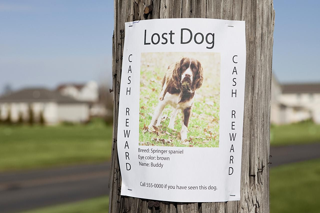 Search lost pets - King County