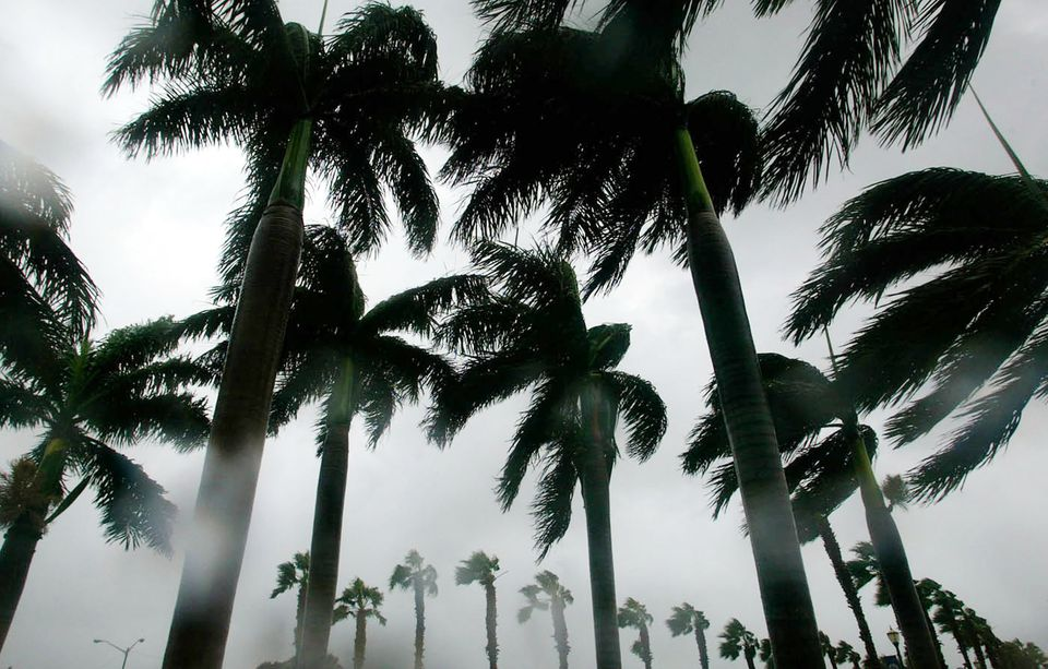 Tropical storm force winds from September 2004's Hurricane Frances blow through trees in Fort Pierce, Florida.