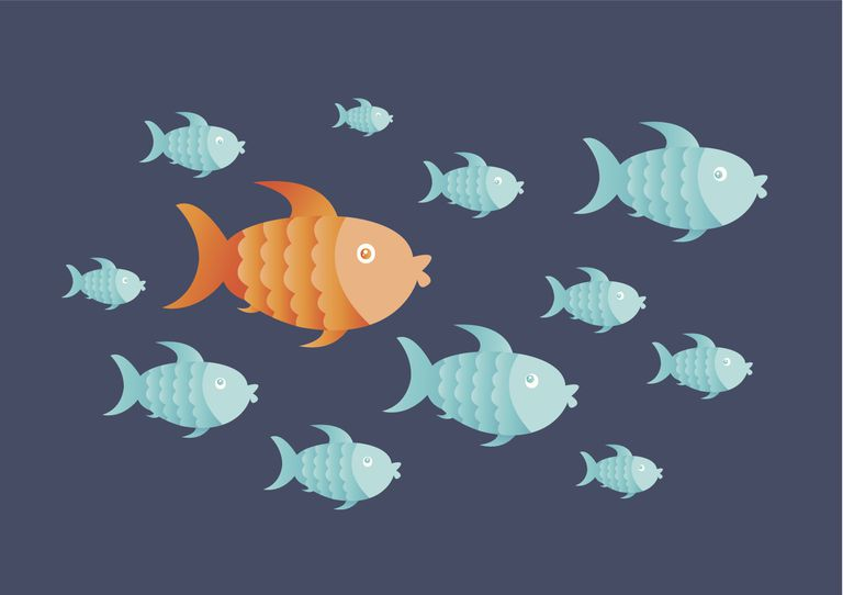 one fish standing out from group of fish