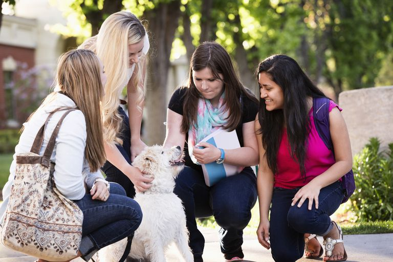 Students petting dog on college campus
