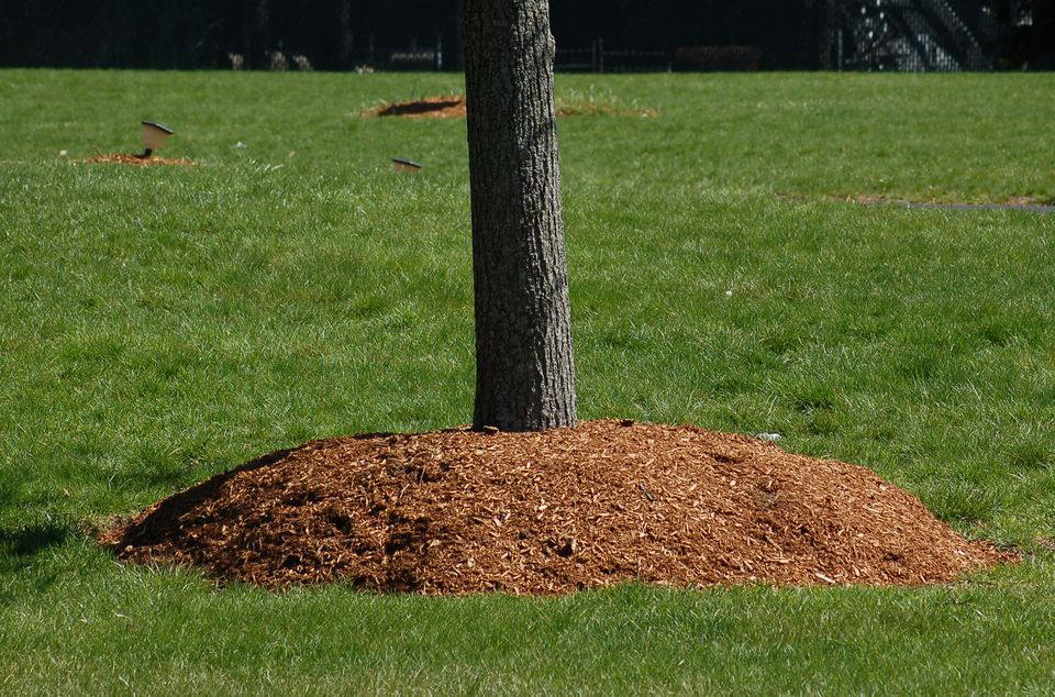 Image: mulch volcanoes aren't good for trees.