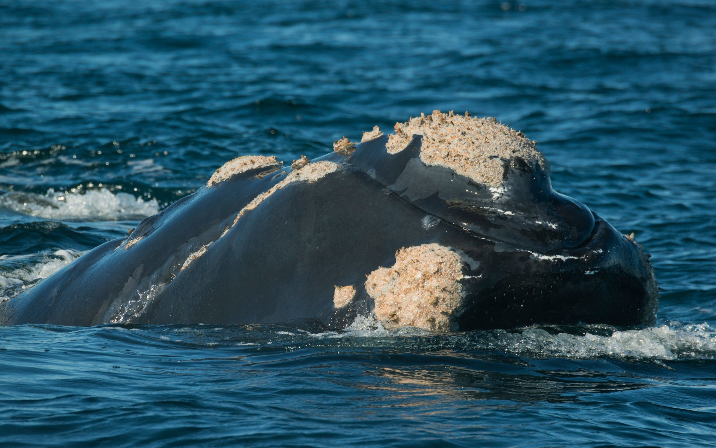 Africa S Top Ten Whale And Dolphin Watching Destinations