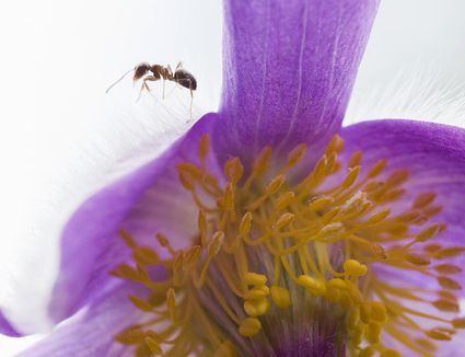 Organically Controlling Mealybugs In Your Flower Garden