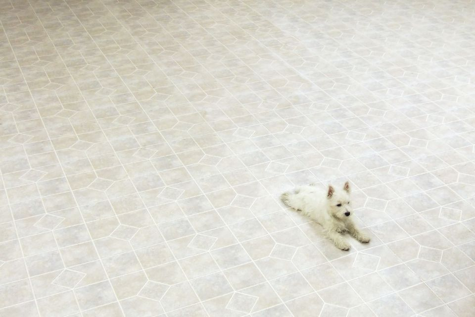 Dog on linoleum floor