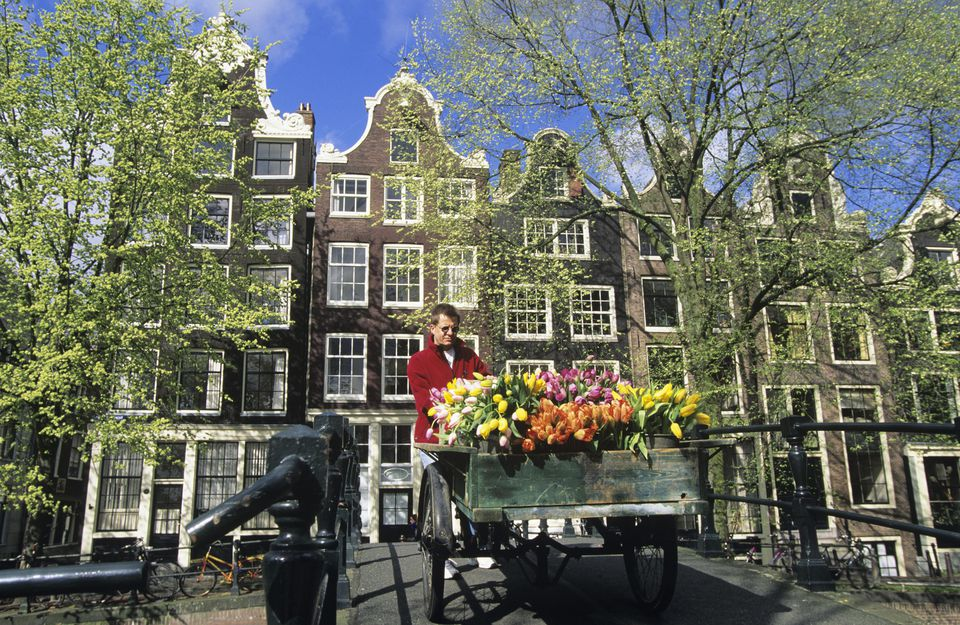 Man pulling barrow full of tulips over footbridge over Brouwersgracht Canal, Amsterdam, Holland.