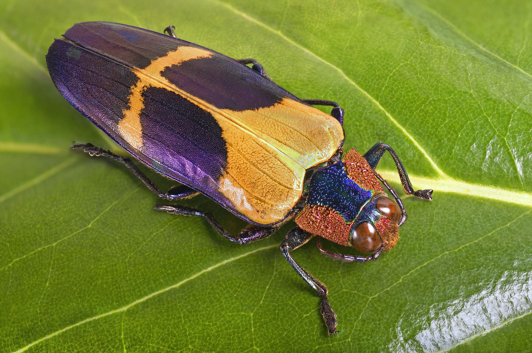 Learn 10 Fun Facts About Insects