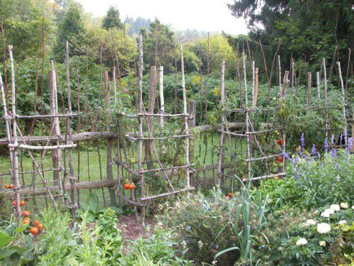 Weathered tree branch tomato cages add character to a practical vegetable garden.