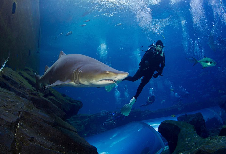 Diving with sharks in Denver Aquarium