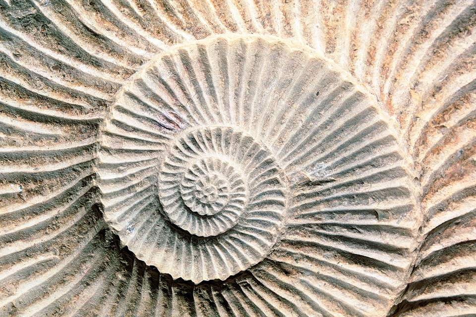 Spiral fossil