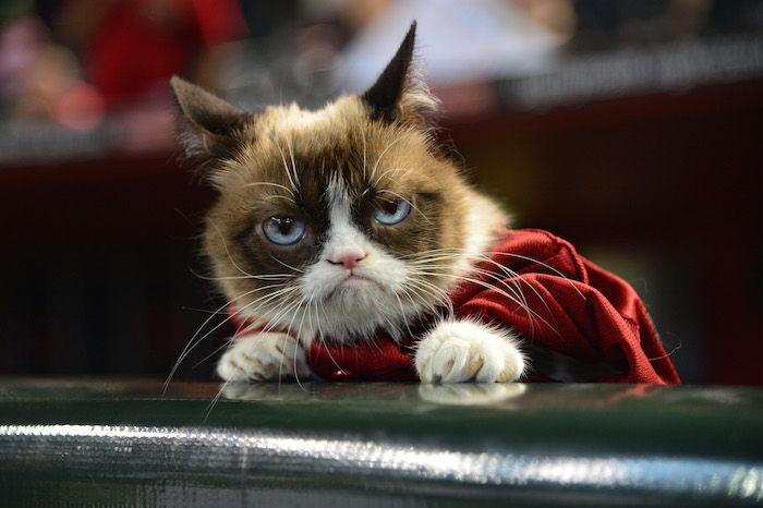 Tard the Grumpy Cat Meme