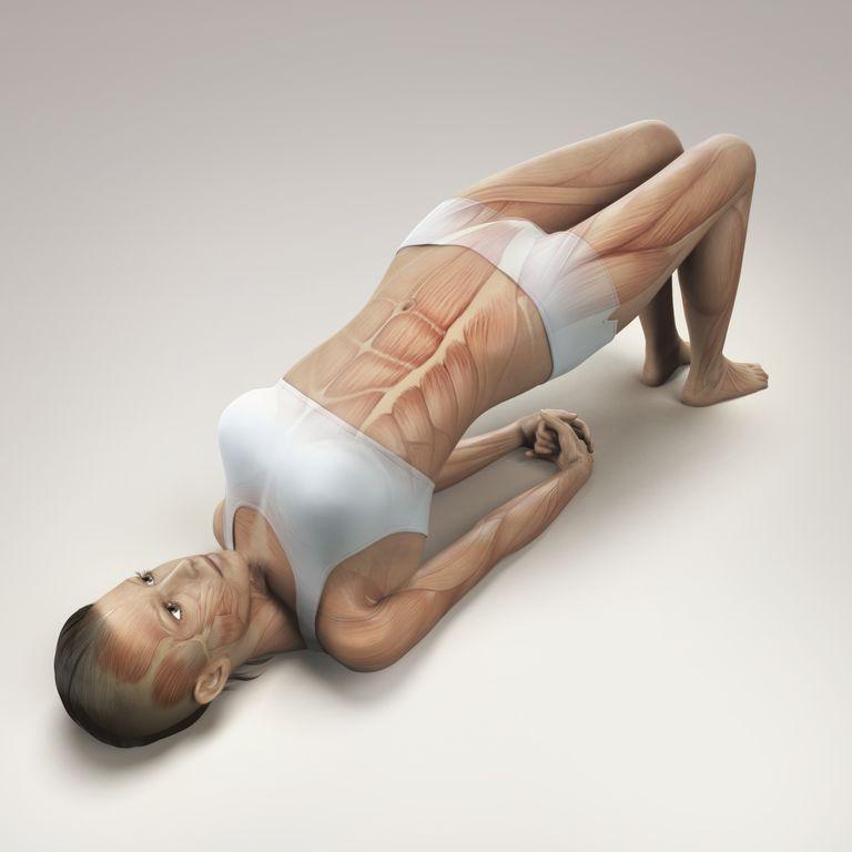 Bridge pose with anatomy diagram