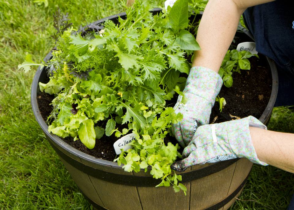 container garden vegetables. Advantages Of Vegetable Container Gardening Garden Vegetables