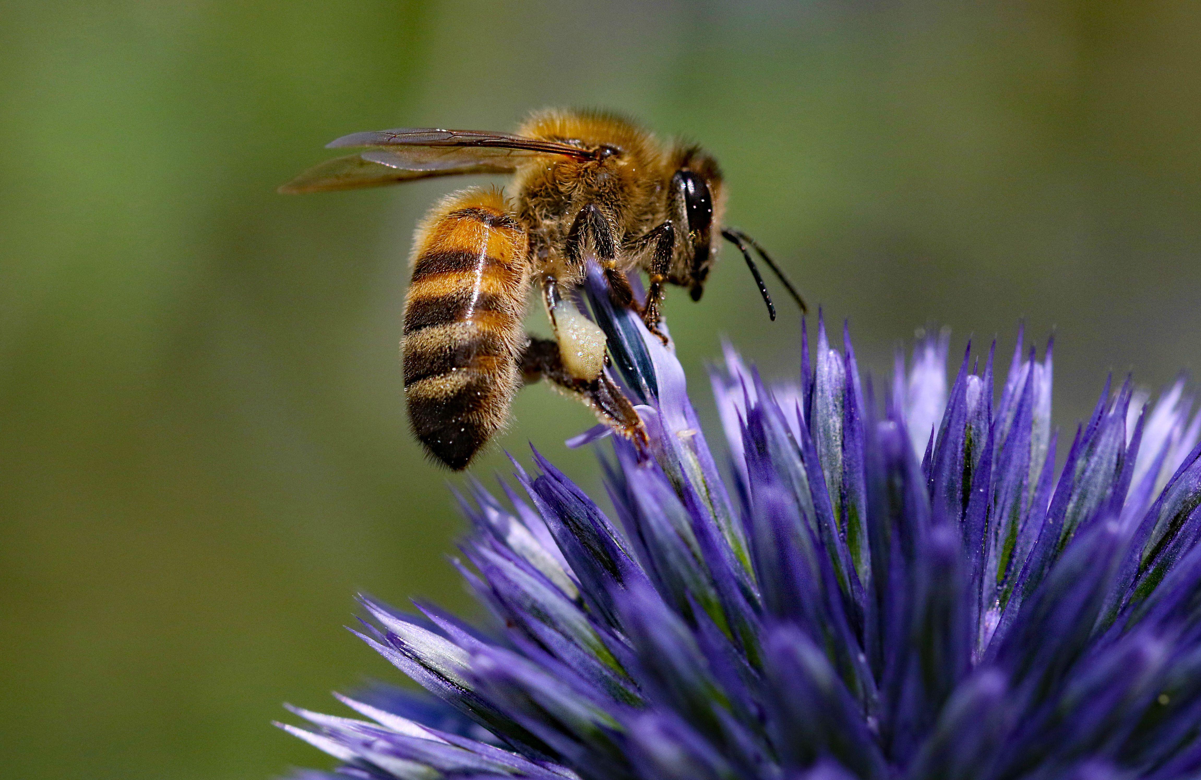 Bee legends folklore and mythology biocorpaavc