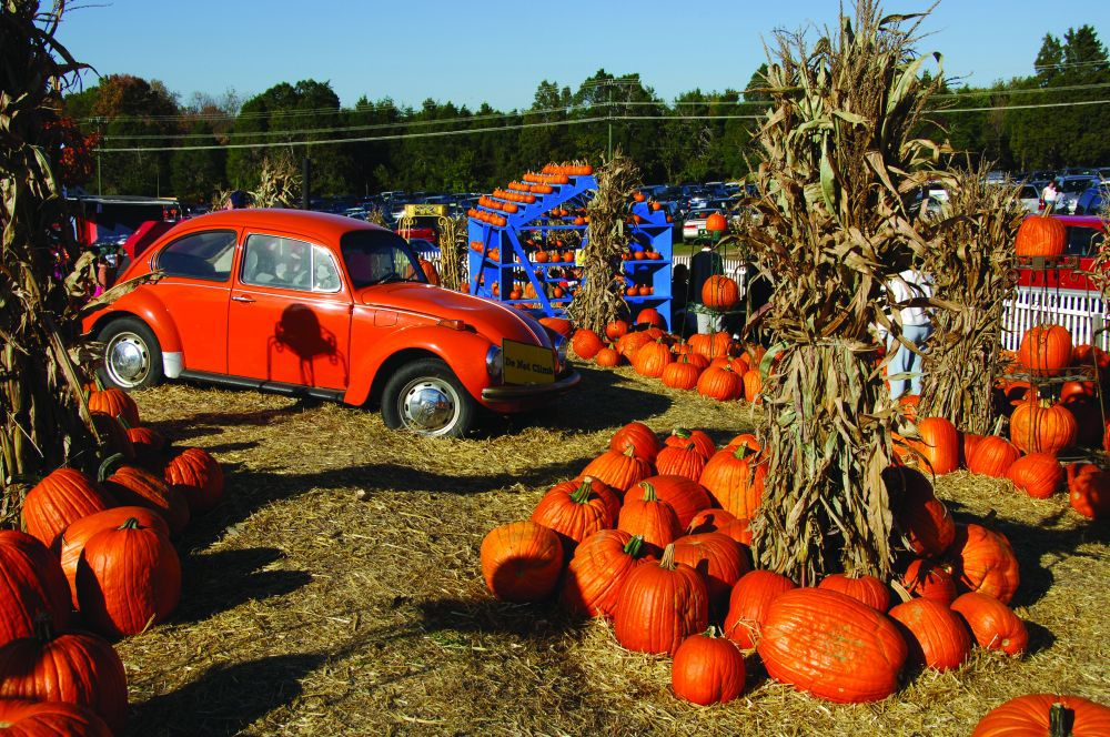 Best 10 Fall Festivals In Northern Virginia