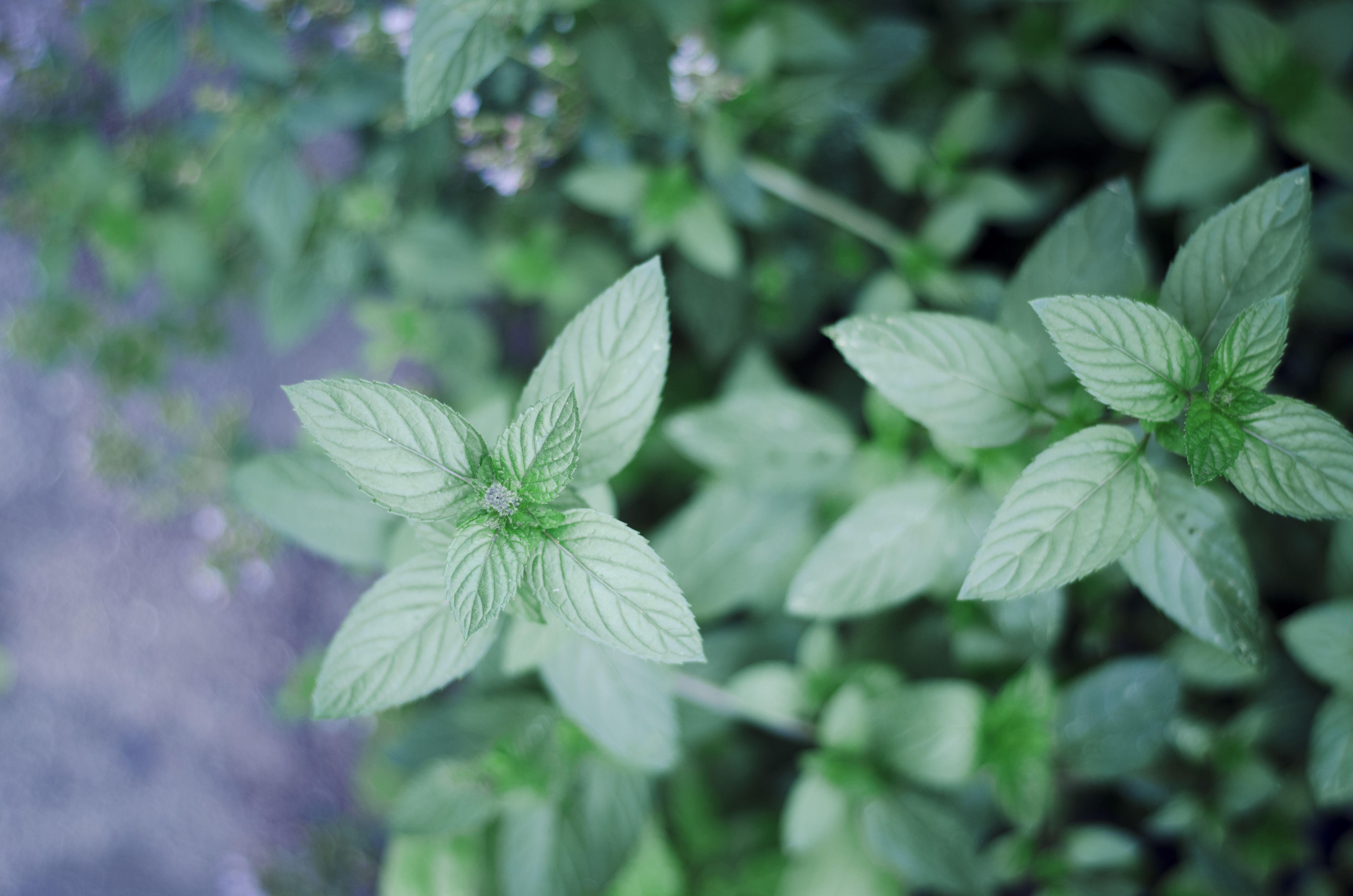 5 best perennial herbs for your garden