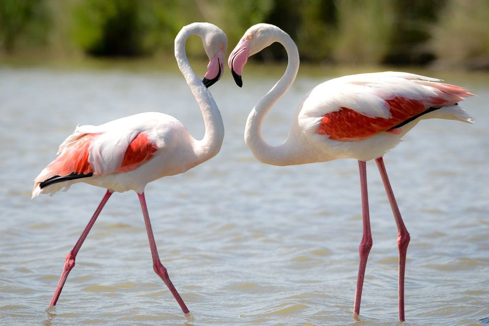 Fun Facts About Flamingos Bird Trivia