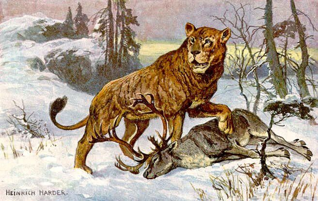 cave lion panthera leo spelaea