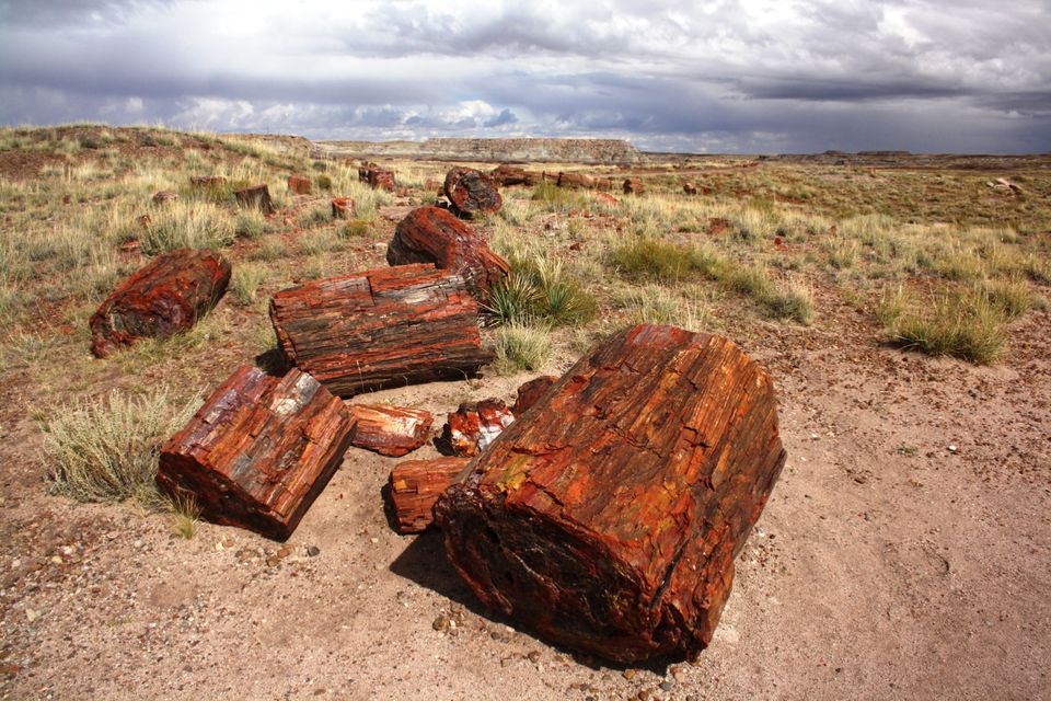 A travel guide to petrified forest national park sciox Choice Image