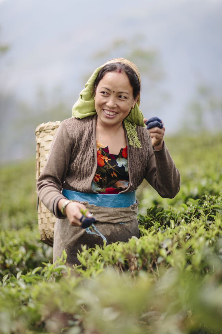 Té Darjeeling en la India