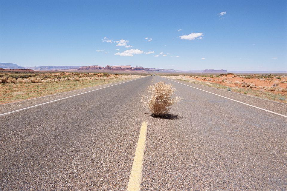 Tumbleweed on Road