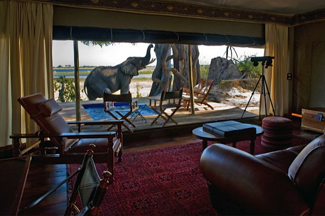 Elephants right at your safari lodge in Africa