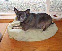Pillowcase Dog Bed Craft
