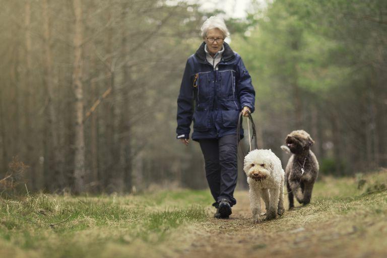 Senior woman walking dogs