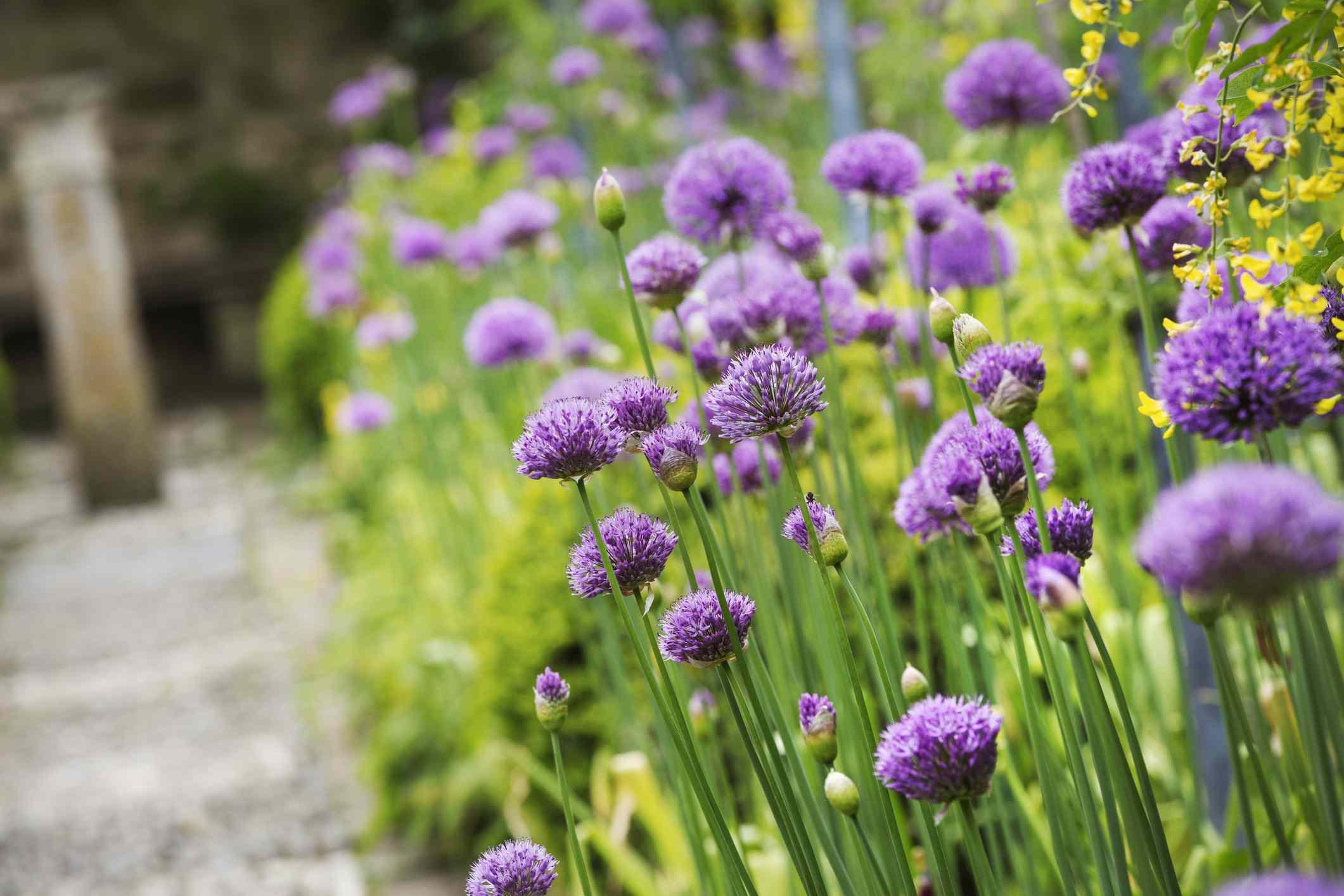 Pictures of purple flowers mightylinksfo