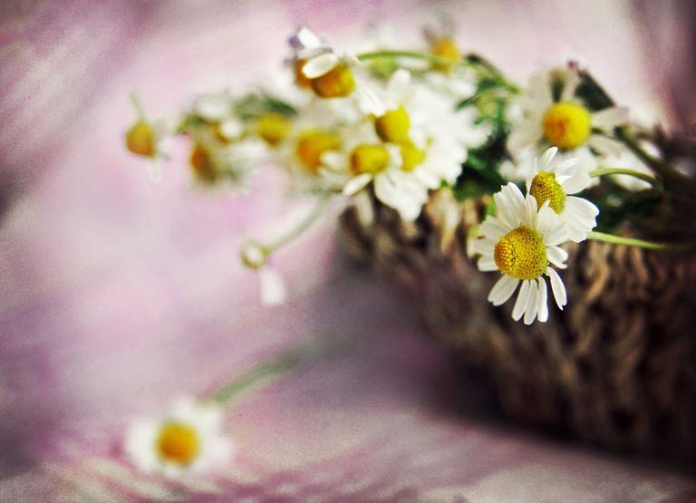 Canasta con flores de manzanilla