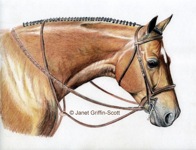 Drawing Lesson Realist Horse Head In Colored Pencil