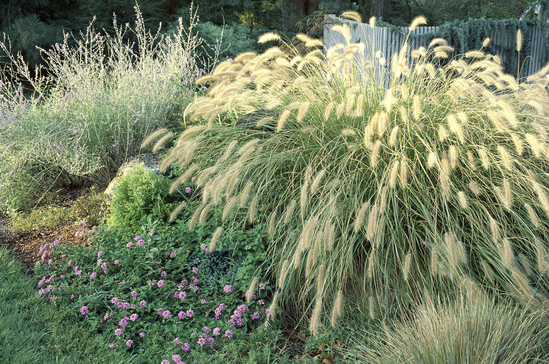 Best ornamental grasses for privacy workwithnaturefo