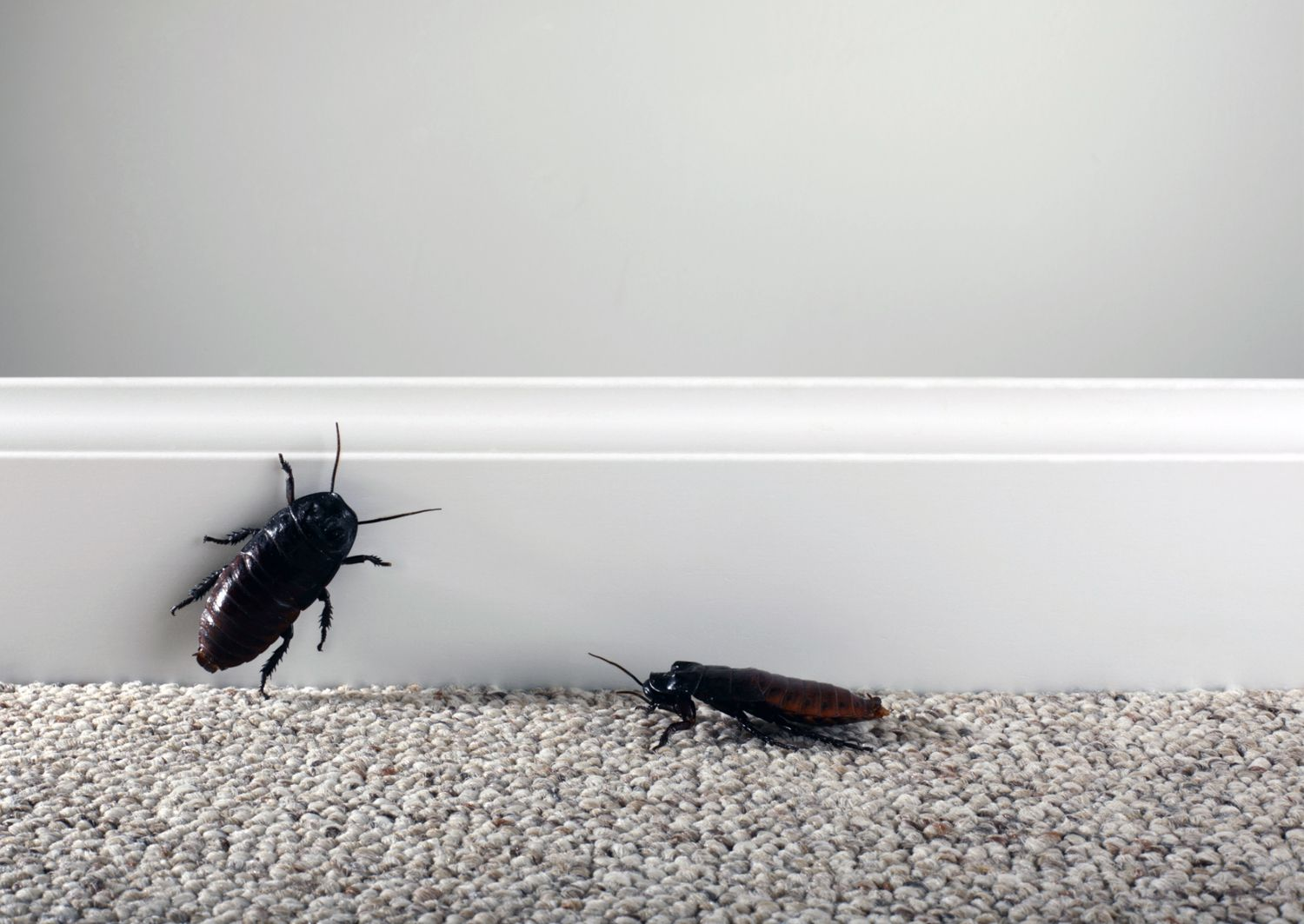 How to Move Without Taking the Bugs and Roaches With You. How to Control and Identify Bugs that Eat Clothes