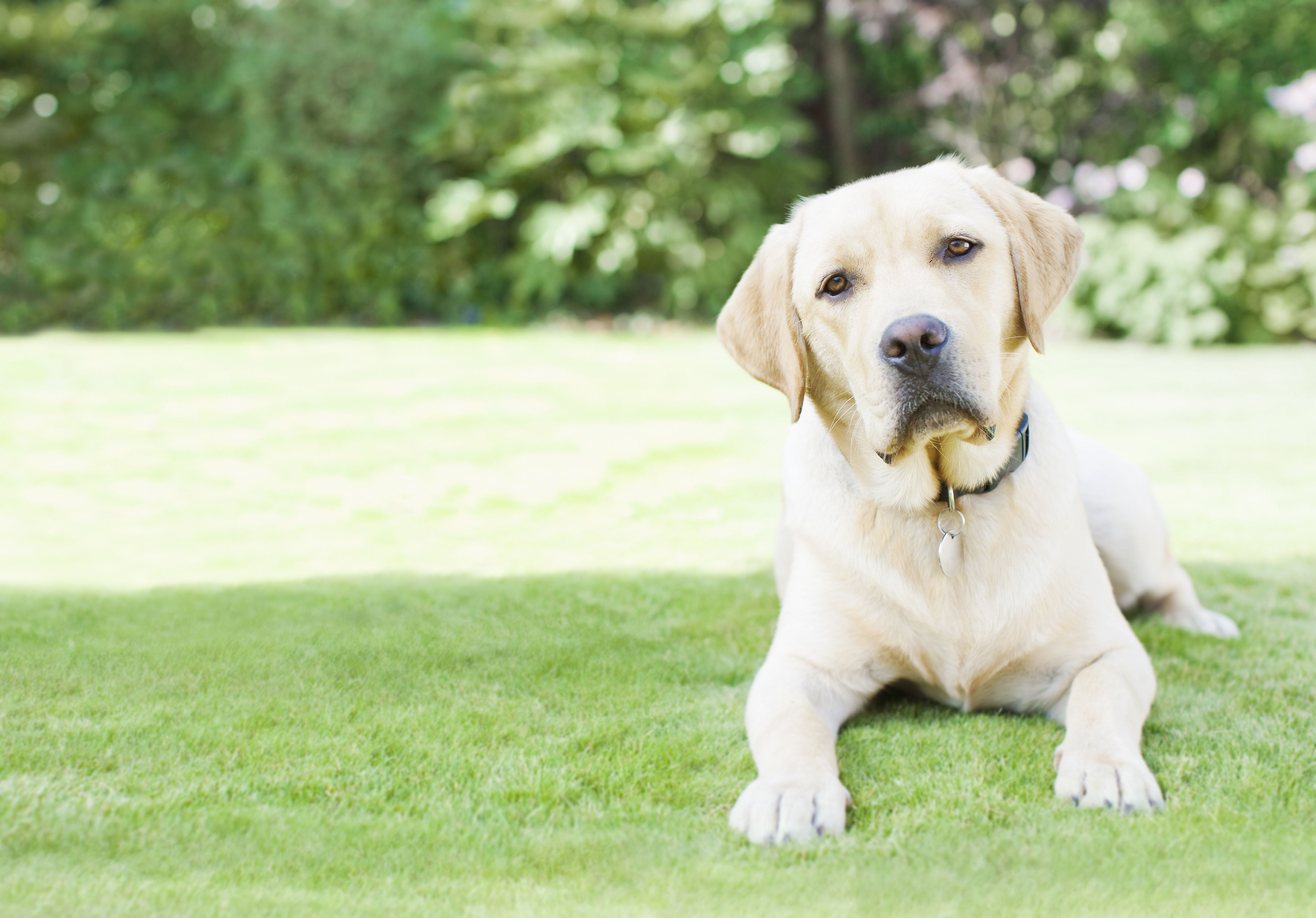 Diseases Dogs Can Get From Birds