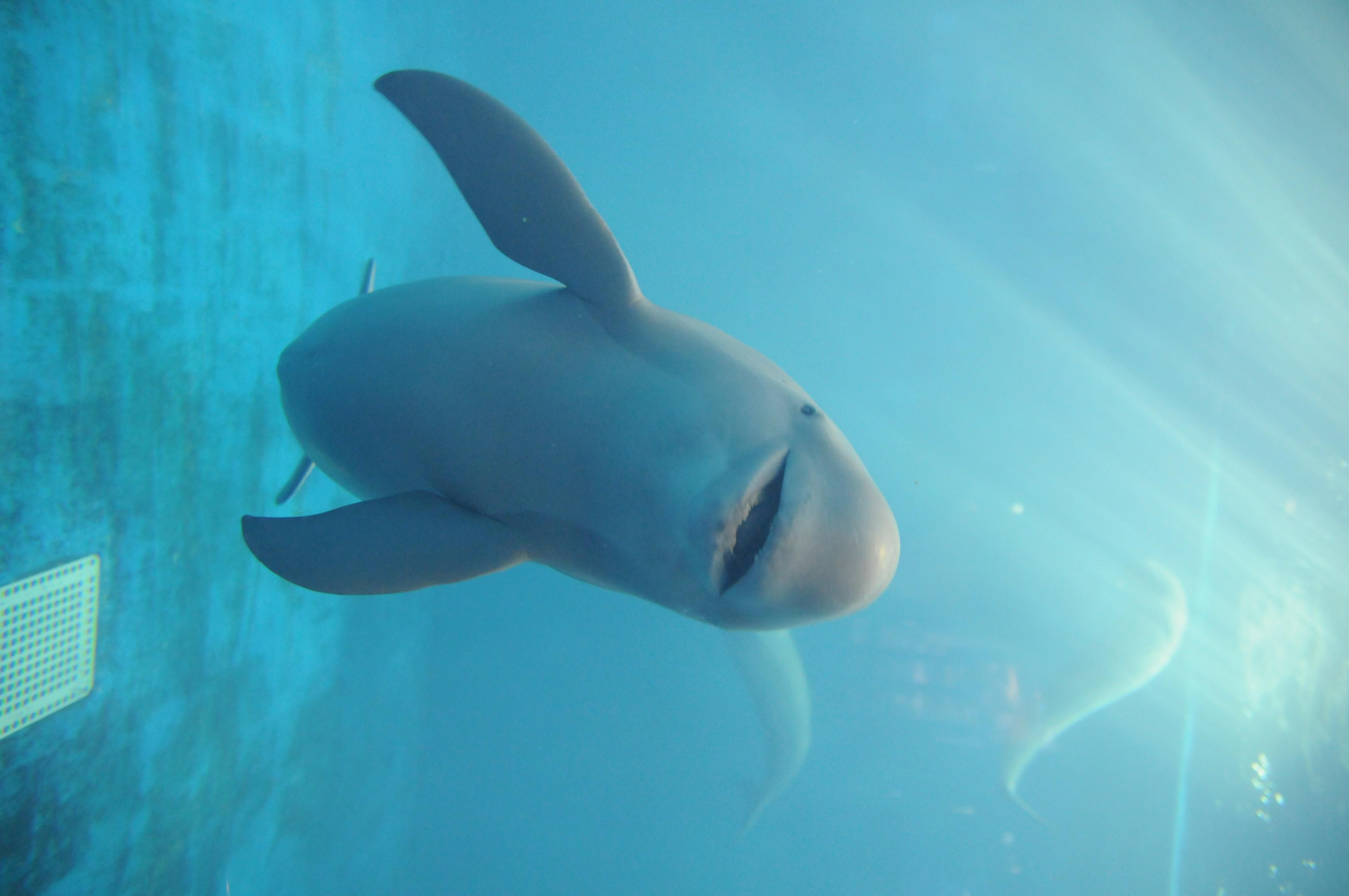 Facts About Porpoises