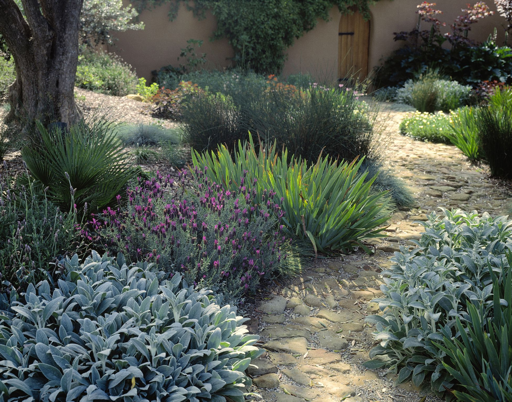 Garden design using plant texture for Garden design plants