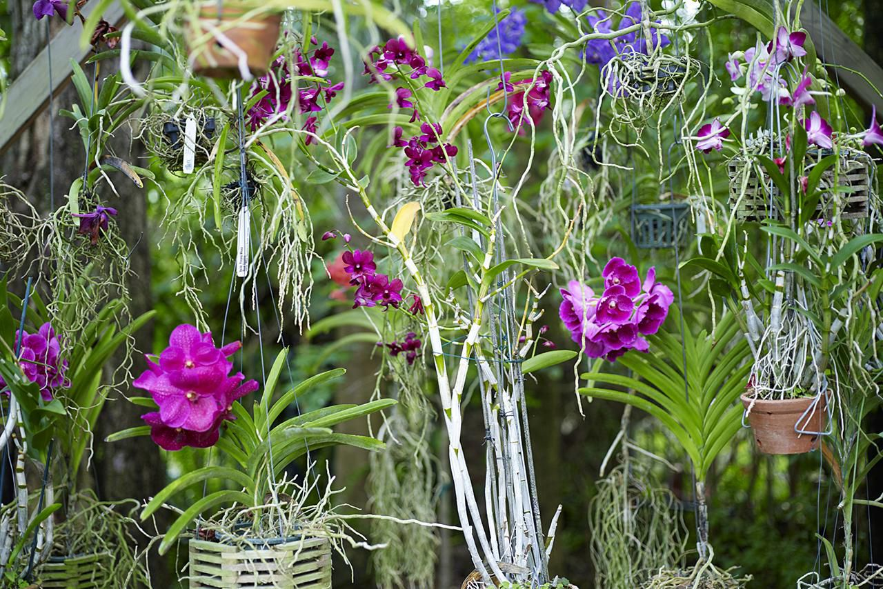 How To Fertilize Your Orchid Collection
