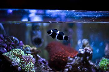 Causes and cures for brown algae in aquariums for Cloudy fish tank water in established tank