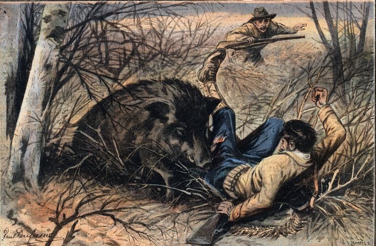 Wild boar attack on a hunter, in the Landes region, in France. Illustration from French newspaper Le Petit Parisien, 1908. Private Collection.